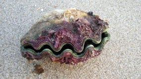 El molusco o el molusco Imagen de archivo
