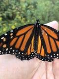El monarca aterrizó en mi mano foto de archivo