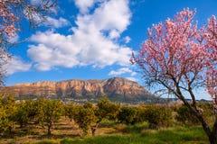 El Mongo en Denia Javea en primavera con el árbol de almendra florece Imagen de archivo libre de regalías