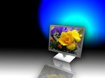 El monitor Foto de archivo libre de regalías