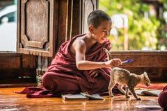 El monje asiático suroriental del niño consigue distraído por un gato de learnin imagen de archivo libre de regalías