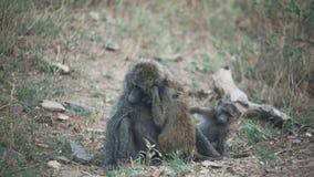 El Monkeying alrededor Foto de archivo libre de regalías