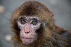 El mono Foto de archivo