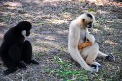 El mono fotografía de archivo