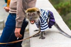 El mono agresivo acomete al transeúnte fotografía de archivo libre de regalías