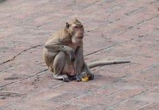 El mono come Imagen de archivo