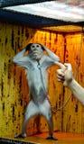 El mono da para arriba Fotos de archivo
