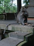 El mono de la madre y del bebé se sienta junto en el santuario del mono fotografía de archivo