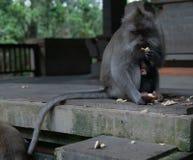El mono de la madre y del beb? se sienta junto en el santuario del mono fotos de archivo libres de regalías