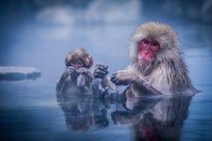 El mono de la nieve relaja tiempo Fotos de archivo libres de regalías