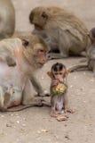 El mono del bebé goza de la comida con la familia Fotos de archivo libres de regalías