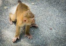 El mono del bebé mira alrededor Foto de archivo