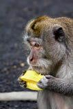 El mono eatting una fruta Foto de archivo libre de regalías