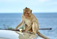El mono en el coche está comiendo tailandia Fotografía de archivo
