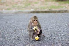 El mono está comiendo el plátano y el mono del bebé es leche de consumo foto de archivo