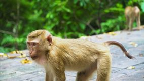 El mono juega en un parque nacional con un hábitat natural de la selva tropical de animales metrajes