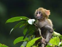 El mono lindo del bebé que come las hojas Fotografía de archivo