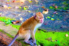 El mono lindo del beb? foto de archivo libre de regalías