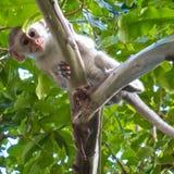 El mono nos está esperando Foto de archivo libre de regalías