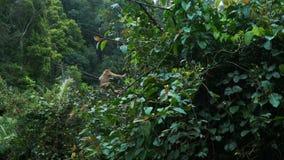 El mono que salta en una rama almacen de metraje de vídeo