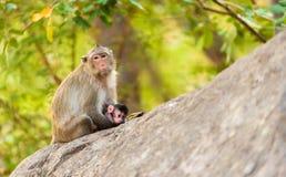 El mono se sienta en la piedra que detiene a su pequeño bebé Fotografía de archivo