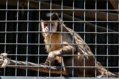 El mono se sienta en una jaula del parque zoológico Fotos de archivo libres de regalías