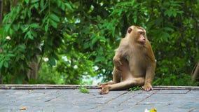El mono se sienta en una selva cerca de un camino, bosque tropical almacen de metraje de vídeo