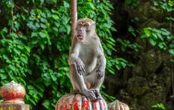 El mono se sienta encima de las escaleras en las cuevas de Batu Foto de archivo libre de regalías