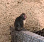El mono sienta el parque zoológico Imagenes de archivo