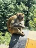 el mono solo foto de archivo libre de regalías