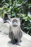 El mono sorprendido Imágenes de archivo libres de regalías