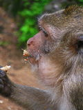 El mono y la nuez Imágenes de archivo libres de regalías