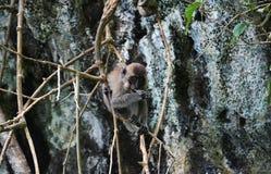 El mono y la piruleta Foto de archivo libre de regalías