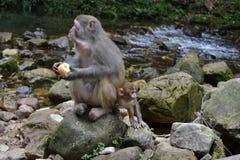 El mono y el niño alrededor de la pista de senderismo en Wulingyuan scen Imagenes de archivo