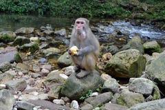 El mono y el niño alrededor de la pista de senderismo en Wulingyuan scen Fotografía de archivo