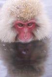 El mono y sí mismo de Onsen sombrean en agua del espejo en Jigokudani lunes Fotografía de archivo