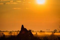 El montón de la termita domina escena en la salida del sol en prados de Okavango Foto de archivo