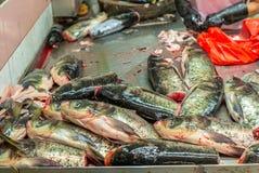 El montón de pescados frescos coloridos dirige en el mercado mojado de Singapur adentro Imagenes de archivo