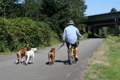 El montar en bicicleta con los perros Fotos de archivo libres de regalías