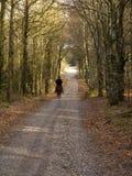 El montar en el bosque Foto de archivo libre de regalías