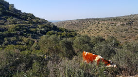 El monte Carmelo Fotos de archivo