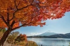 El monte Fuji con el árbol de arce Imagen de archivo libre de regalías