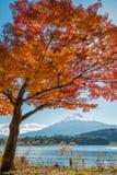 El monte Fuji con el árbol de arce Imágenes de archivo libres de regalías