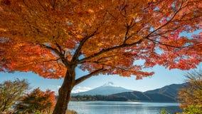 El monte Fuji con el árbol de arce Foto de archivo