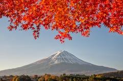 El monte Fuji con el arce rojo hermoso Foto de archivo libre de regalías