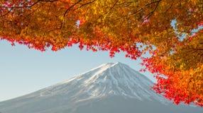 El monte Fuji con el arce rojo hermoso Imágenes de archivo libres de regalías