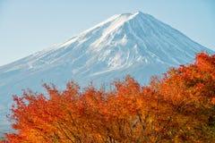 El monte Fuji con el arce rojo hermoso Imagen de archivo