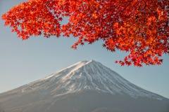 El monte Fuji con el arce rojo hermoso Fotografía de archivo libre de regalías
