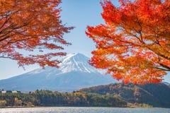 El monte Fuji con el arce rojo hermoso Fotografía de archivo