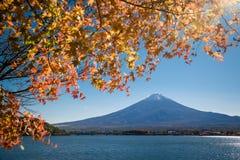 El monte Fuji con las hojas de arce Imagen de archivo libre de regalías